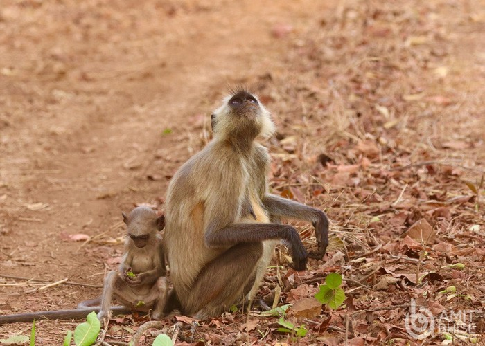 Monkey sitting with his baby