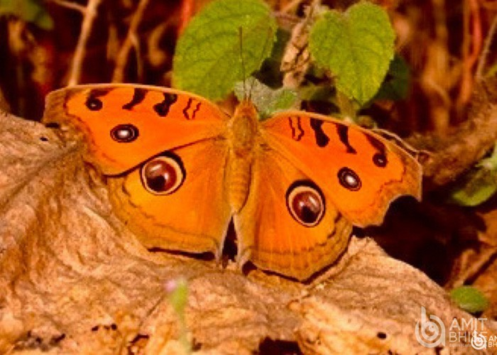 Orange colored butterfly